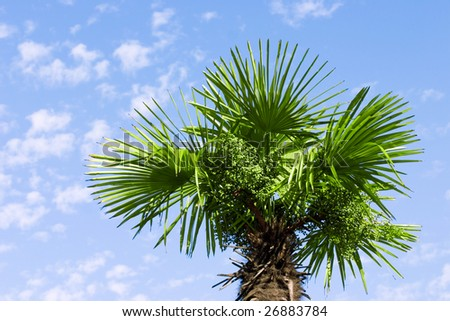 trunk and leaves of palm tree on a background of cloudy sky - stock photo