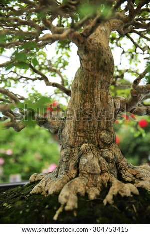 Trunk and root of bonsai tree.