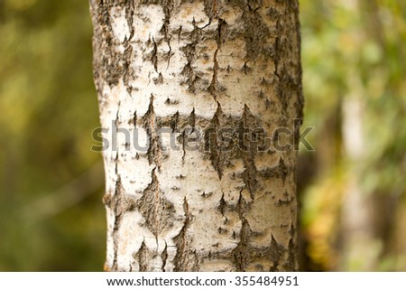 trunk of a tree in a park on the nature - stock photo