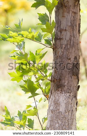 trunk of a tree in nature - stock photo