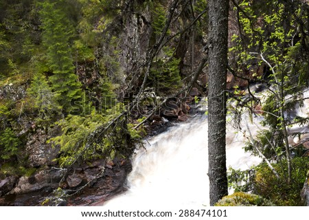 trunk of small spruce tree in dramatic scandinavian landscape with river in canyon with waterfall in background