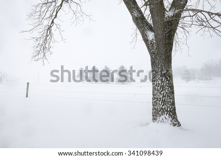 Trunk of Walnut Tree and Snowy Field in Winter - stock photo