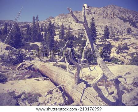 trunk on arid mountain - stock photo