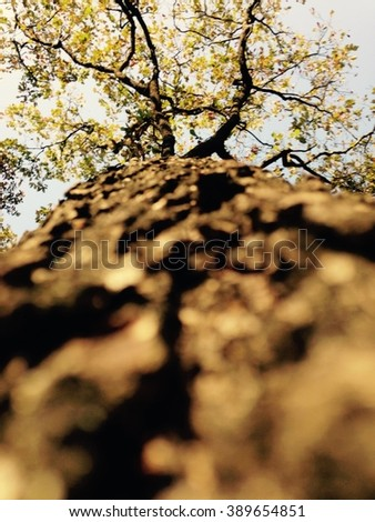 Trunk perspective - stock photo