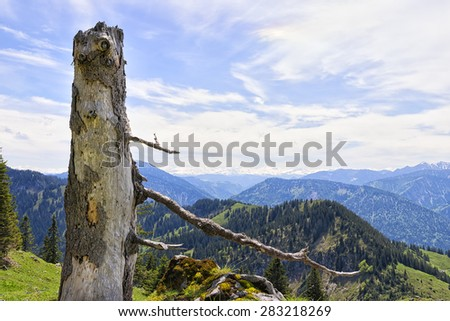 Trunkon the mountain Breitenstein in the Alps in Bavaria, Germany with free space in sky