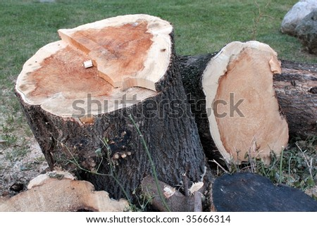 Trunks of cut off trees - stock photo