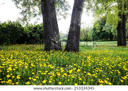 Trunks of trees surrounded by blooming yellow dandelions - stock photo