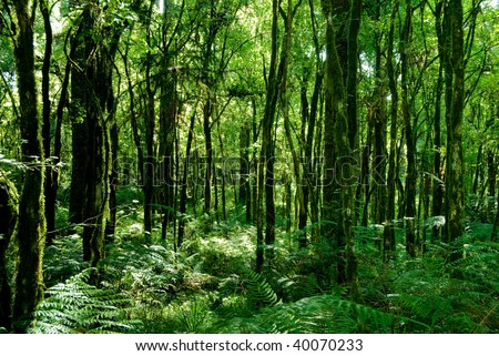 Trunks of trees with moss on brazilian atlantic rainforest. - stock photo