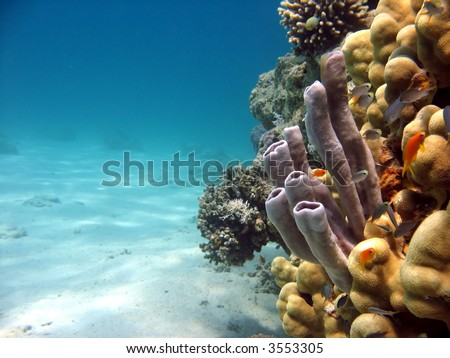 Tube Coral. shot in the Red Sea - stock photo