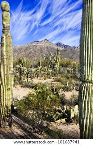 Tucson Arizona Desert View - stock photo