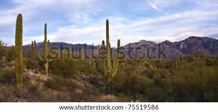Tucson Desert Evening - stock photo