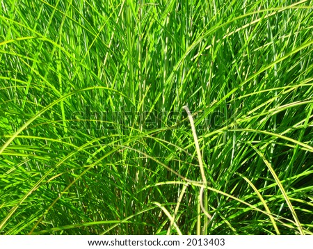 Tuft of saturated grass makes an excellent background image.