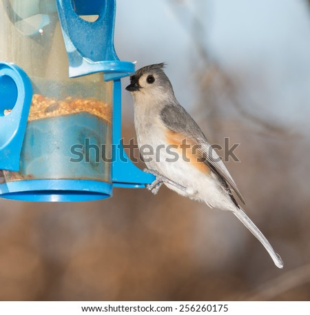 Tufted Titmouse at a bird feeder in winter - stock photo
