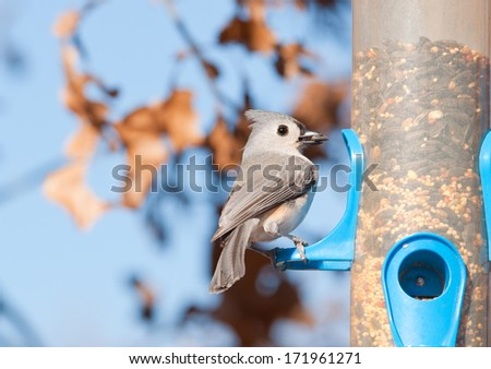 Tufted titmouse, Baeolophus bicolor, with a sunflower seed in his beak at a bird feeder in winter - stock photo