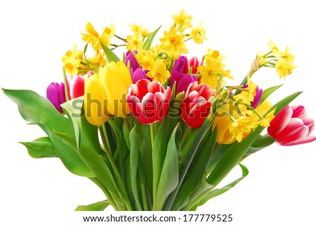 tulip and daffodil bouquet  - stock photo