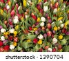 Tulip bouquets - stock photo