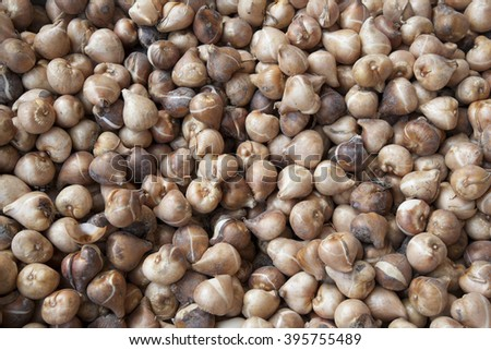 Tulip Bulbs for Sale in Holland - stock photo