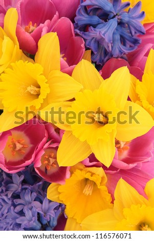 Tulip, daffodil and hyacinth flower arrangement forming a background.