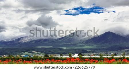 Tulip field under cloud sky with mountain background, Furano, Hokkaido, Japan - stock photo
