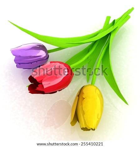 Tulip flower - stock photo