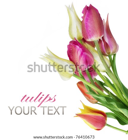 Tulip Flowers bunch over white - stock photo