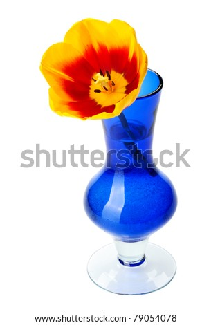 Tulip flowers in a blue glass vase, isolated on a white background. - stock photo