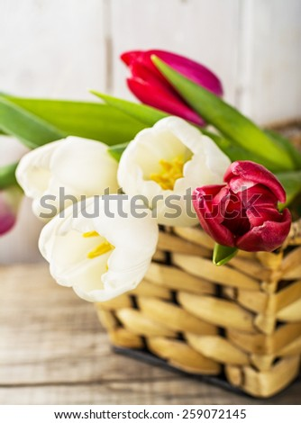 Tulip flowers in basket on a light wooden background - stock photo