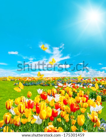 tulip flowers in green grass. spring landscape with butterflies and sunny blue sky - stock photo