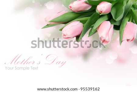 Tulip flowers isolated on white - stock photo