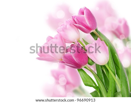 Tulip flowers isolated on white