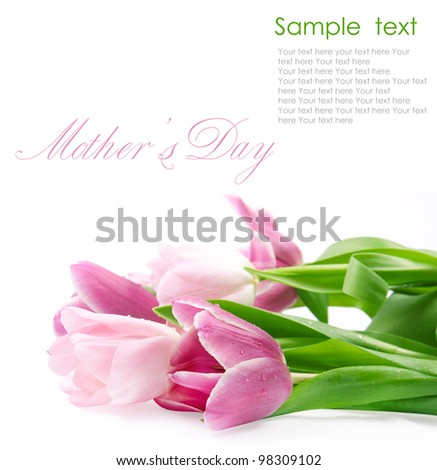 tulip flowers isolated on white - stock photo