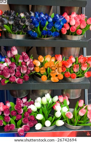 tulip for sale at the market in Amsterdam - stock photo