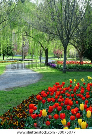 Tulip garden in the springtime - stock photo