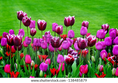 Tulip garden with variety of freshly grown flowers and greenery - stock photo