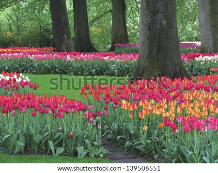 Tulip gardens with red, yellow, white and pink tulips, near Lisse, the Netherlands - stock photo