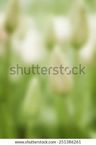 tulip green floral background blur - stock photo