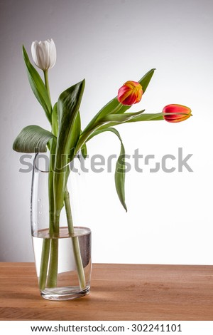 tulip in a vase red tulip in a vase on a table against a white background, white tulip vase with clean water and tulip glass vase, flamed tulip, three tulips, red and yellow tulip vase with tulips - stock photo