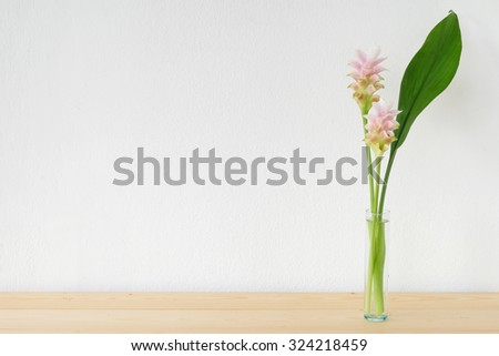 Tulip Siam flowers, Curcuma alismatifolia, in glass vase on table over white wall background