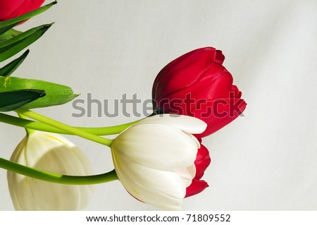 Tulip Time 1 - stock photo