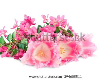 tulips and apple flowers on a white background