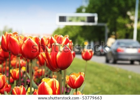 Tulips and city street