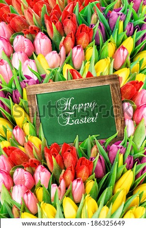 tulips and green chalkboard. fresh spring flowers with water drops. festive background with sample text Happy Easter! - stock photo