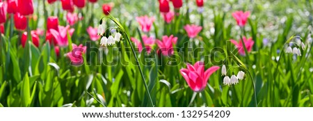 Tulips and lilies of the valley. Floral pattern.  Panorama. Spring landscape. - stock photo