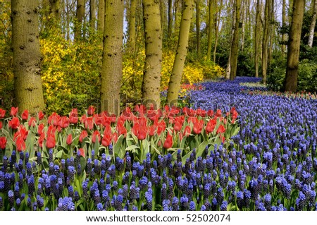 Tulips and other flowers grow in a forrest - stock photo