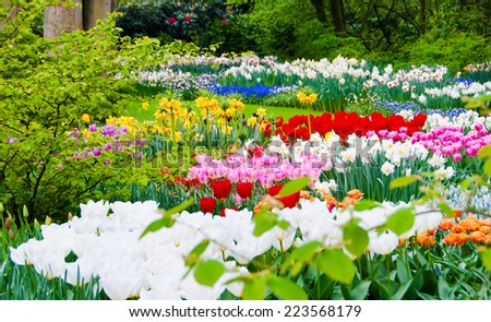 Tulips and other flowers in Keukenhof garden, Netherlands - stock photo