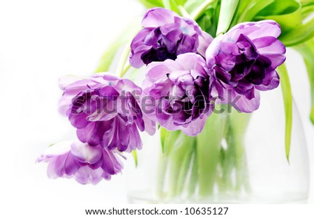 Tulips bouquet in vase - stock photo