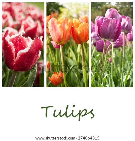 tulips collage ( text in french) - stock photo
