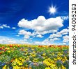 tulips flower bed. colorful flowers over cloudy blue sky - stock photo