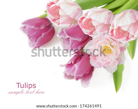 Tulips flowers bunch isolated on white background with sample text