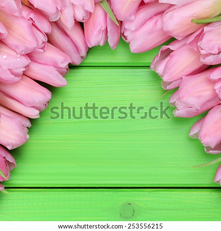 Tulips flowers in spring or mothers day with copyspace for your own text - stock photo